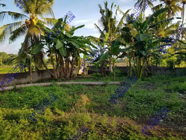 Dijual tanah kavling daerah strategis di Tabanan kota -1baliproperty-id1bp105