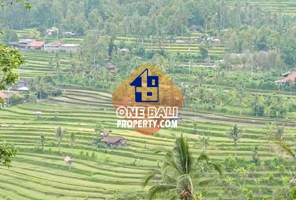 Dijual kebun cengkeh daerah pengembangan pariwisata singaraja-id1bp150